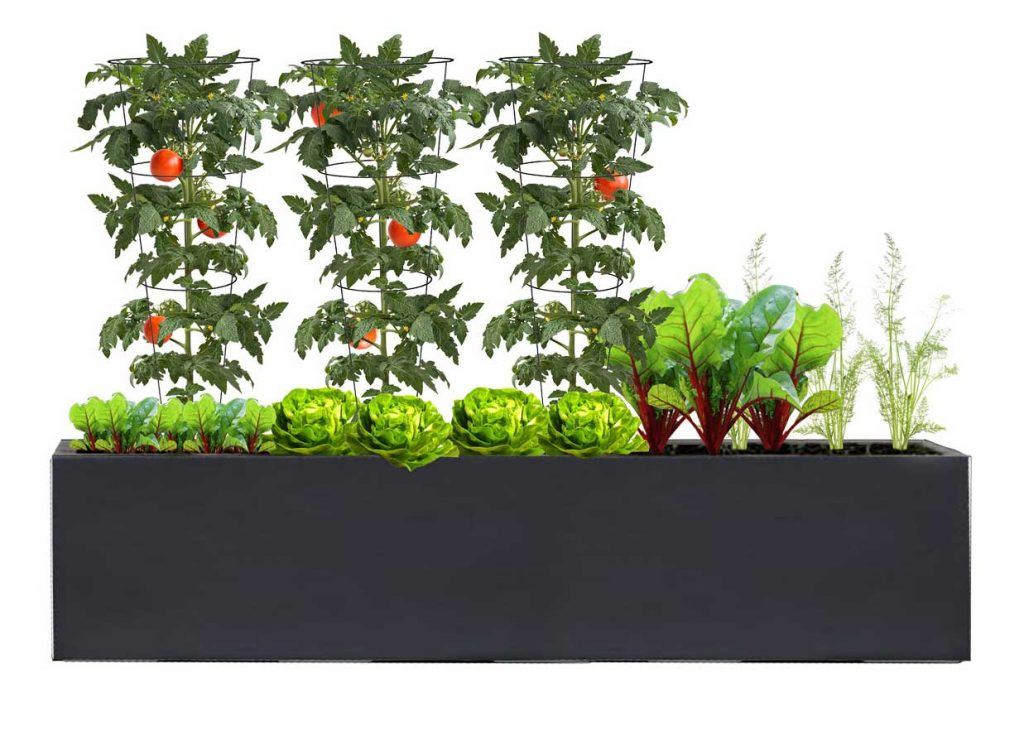 Large Rectangle Charcoal Planter with Veggie Patch Plant palette - BLOOMTIME