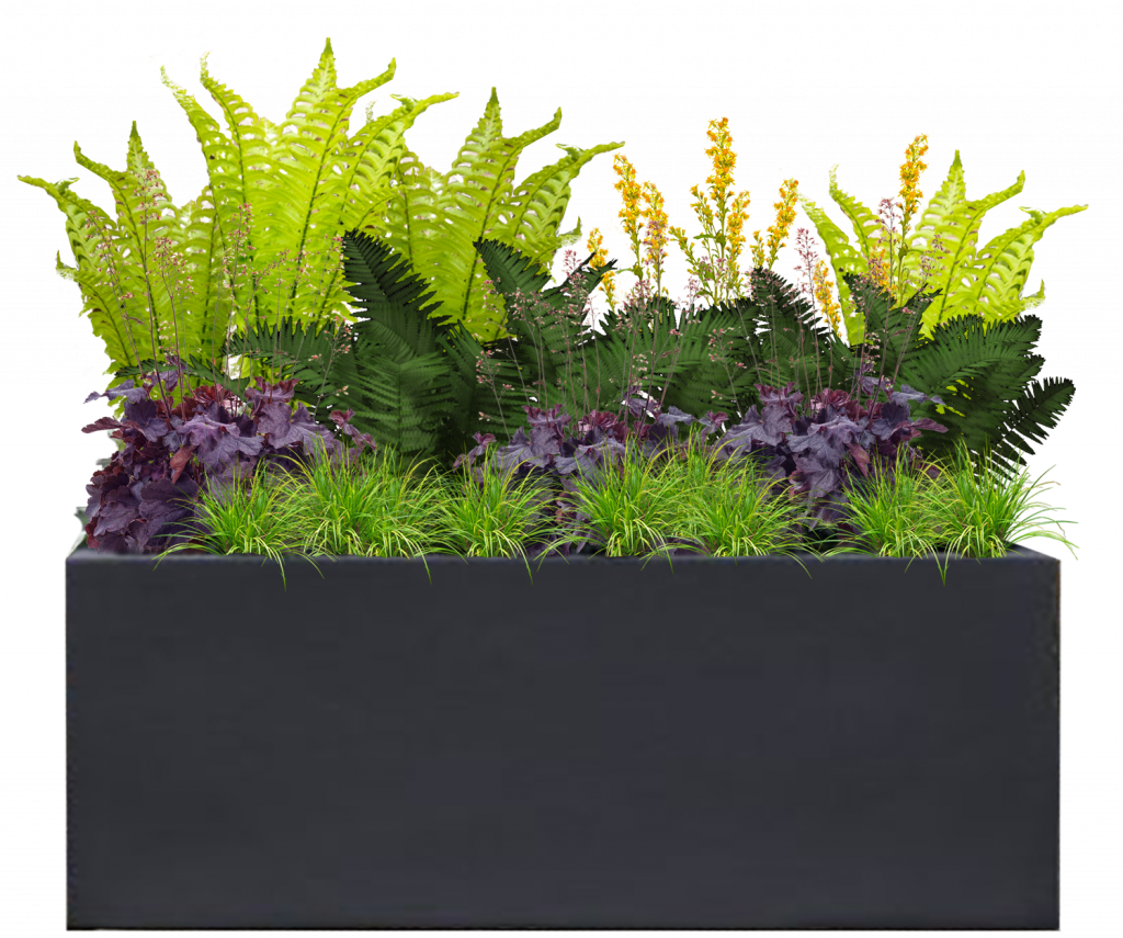 Charcoal Medium Rectangle Planter with Fern Glade Plant Palette